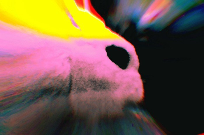 Psychedelic killed my bunny